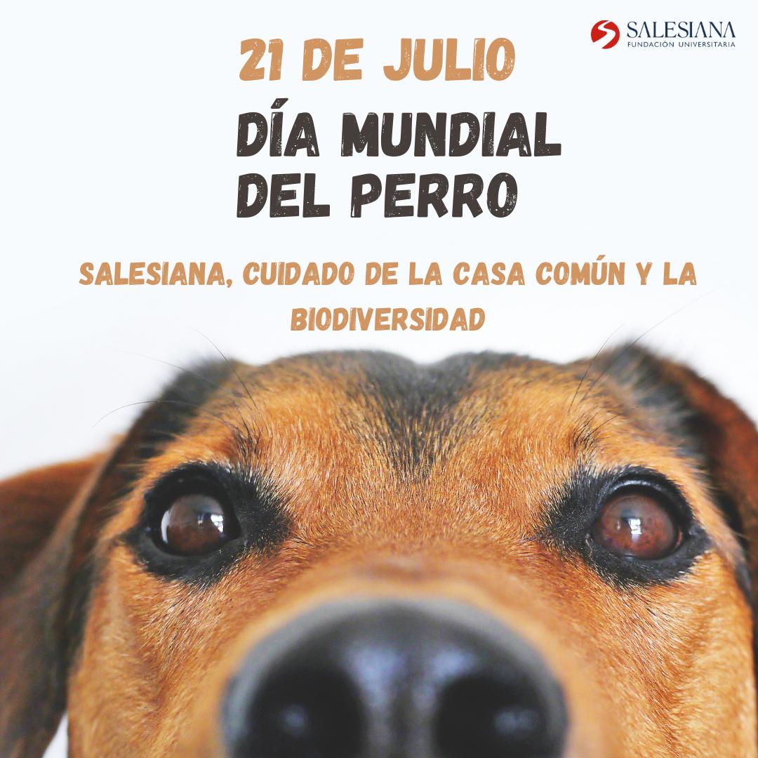 Día Mundial del Perro 8
